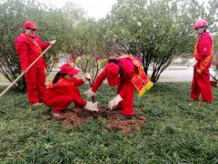 西南油气田公司蜀南气矿渝西采气作业区连续14年到井站开展植树活